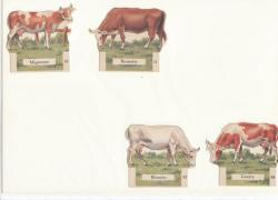 collection-im-la-vache-serieuse-0006.jpg